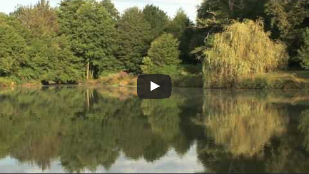 Carp France - Overview